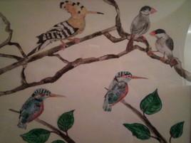 Oiseaux exotics