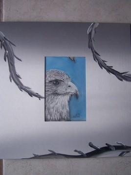l'aigle royale