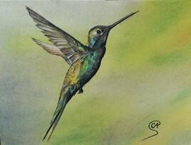 Colibri au pastel