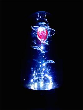 Rose rouge sous cloche de verre