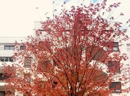 L'automne rougeoyant