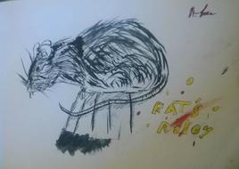 rat's rules
