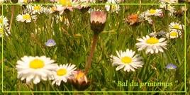 Bal du printemps...!