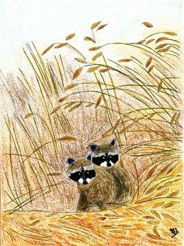 Deux ratons