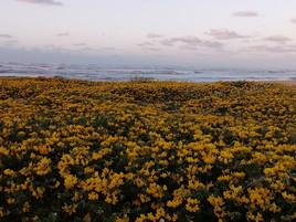 Fleurs de bord de mer