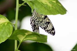 Butterfly nature photography - IMG 0325