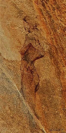 '' F. Fossile ''
