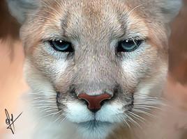Cougar....(novembre 2015)
