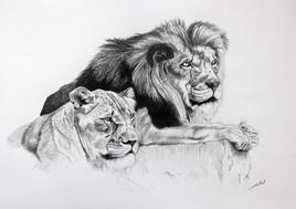 Lion, Lionne à l'affût