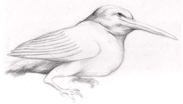 Oiseau II