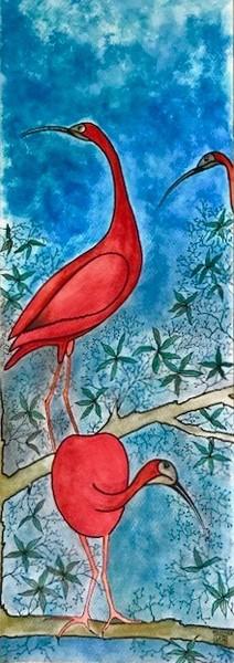 Ibis rouge du Brésil