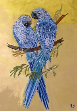 Duo perroquets