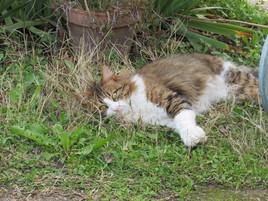Allongé sur l'herbe