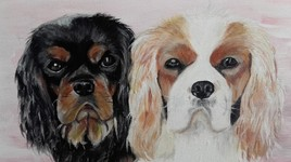 2 chiennes Cavalier King Charles