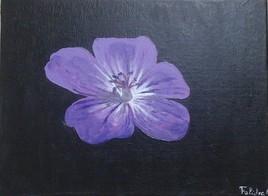 Violette du soir