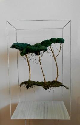 installation foret de pins