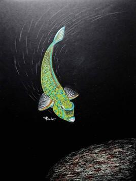 Poisson perroquet à écailles jaunes (Scarus ghobban) / Drawing A Blue-barred parrotfish