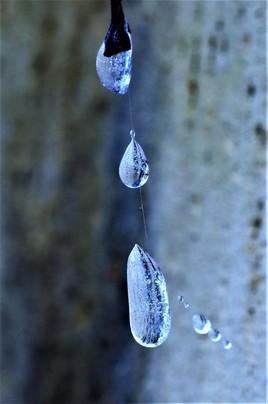 Gouttes d'eau gelées prisonnières d'une toile d'araignée ..