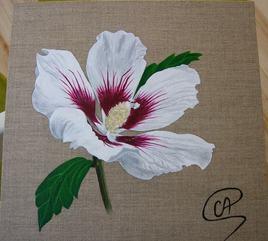 Peinture Fleur - Hibiscus blanc
