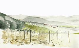 Vignes de la Cadière