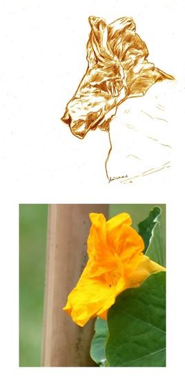 Un chien jaune