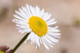 Macro florale