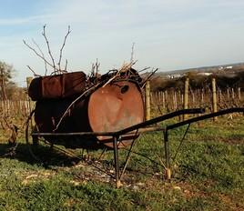 Brûlot dans la vigne en Bourgogne