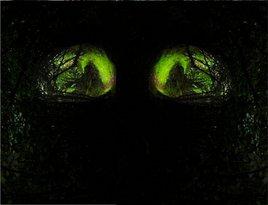 Des yeux dans la nuit