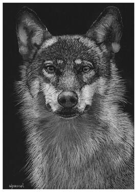Le loup est voleur par instinct, l'homme par cupidité.