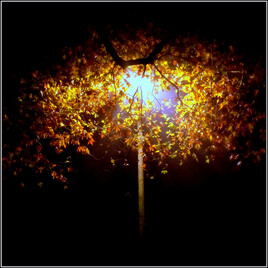 arbre-lampadaire...