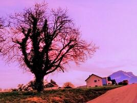 Comme un arbre nu