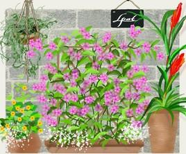 les pots d'fleurs