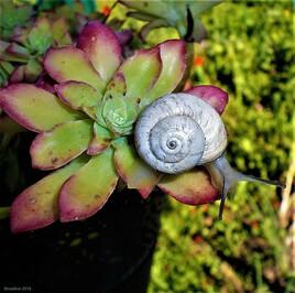 la Nature nous regarde 2..