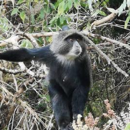 singe dans la jungle