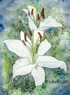 Aquarelle. Lilium n°3