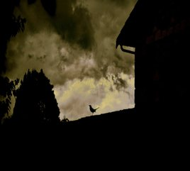 Merle sous ciel d'orage