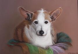 Portrait de Chaussette