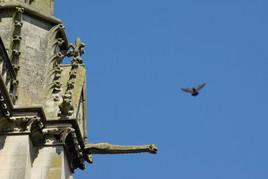 La gargouille et l'oiseau
