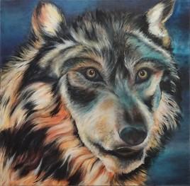 Le loup de bagnéres