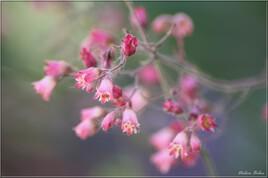 Floral inspiration - IMG  7004-2