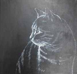 Chat en clair obscur