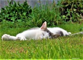 la sieste de Mioumiou :)