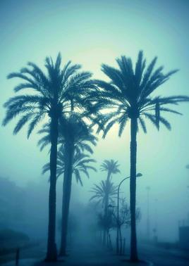 """""""Walking in the fog.."""""""