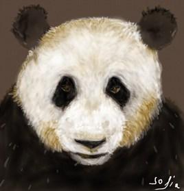 Le Papa Panda