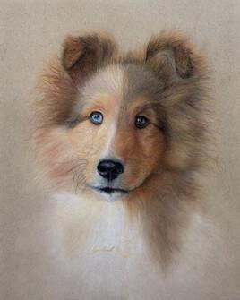 Portrait de Daividh Gilmour - Berger Shetland