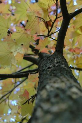 arbre 01