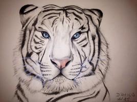 Tigre serein #2