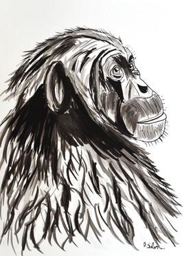 Portrait du chimpanzé