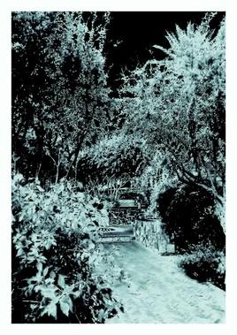 """""""Femme seule sur un banc dans un jardin"""" par Vanessa Martinez 2017"""