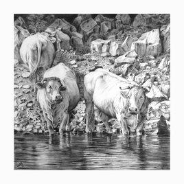 Vaches en bord de Loire